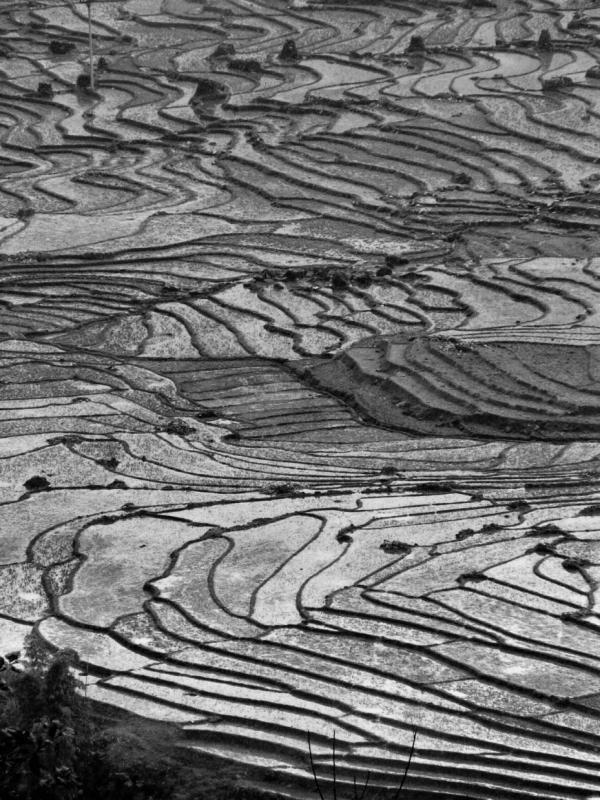 Les rizières en espaliers