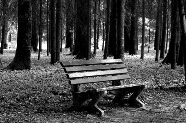 Le banc solitaire