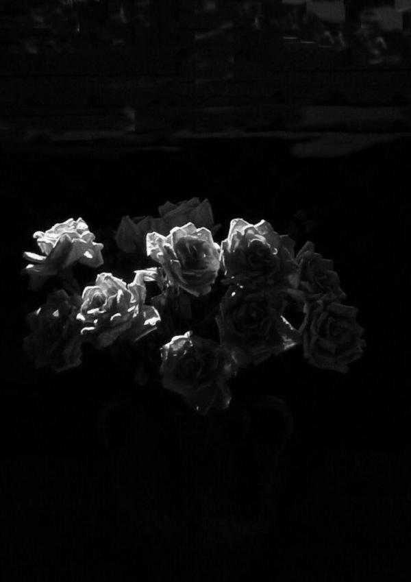 Roses, 2008