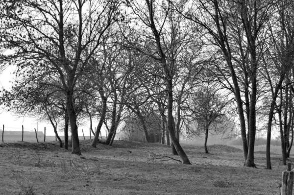 La campagne au Louroux